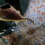 Gambar Proses Pembuatan Batik yang Sangat Rumit